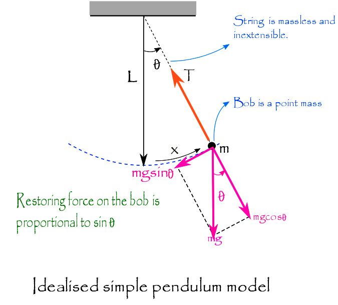 when a simple pendulum is pulled to one side and released, it oscillates  about its equilibrium position in simple harmonic motion