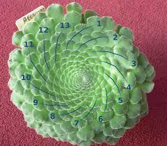 The Fibonacci numbers appear as numbers of spirals in leaves and seedheads as well.