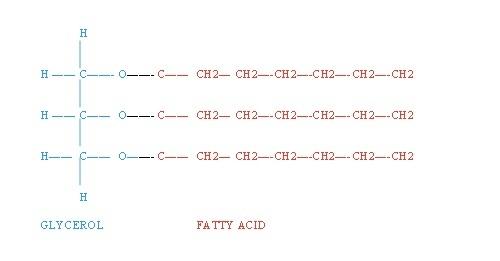 Generic triglyceride structure