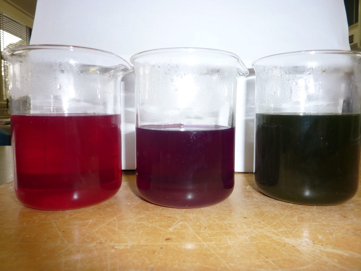 Red cabbage indicators in acidic (red), neutral (purple), and basic (green) media. Photo by Flickr user brittgow