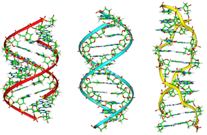 A, B, and Z DNA [3]