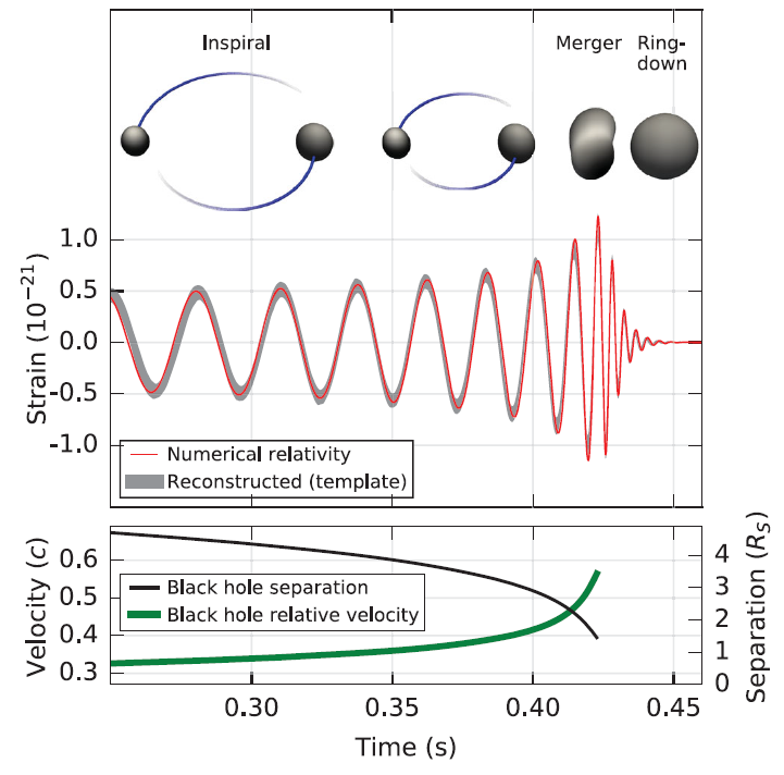 As the black hole separation decreases, the black holes rotate rapidly around each other, releasing gravitational waves towards the detector in a large burst [6].