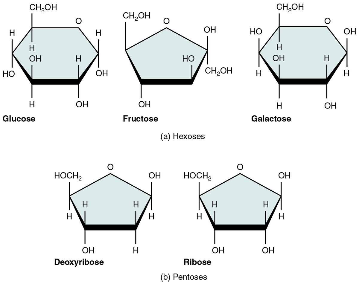 Common monosaccharides