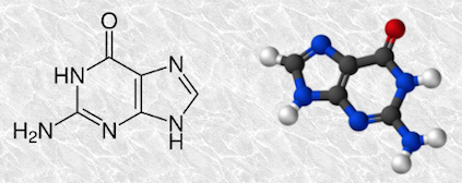 guanine[1]