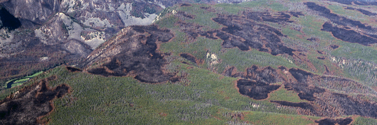 Aerial shot of 1988 Yellowstone fires