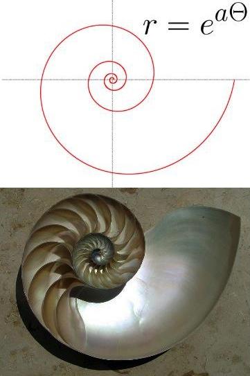 e Logarithmic Spiral