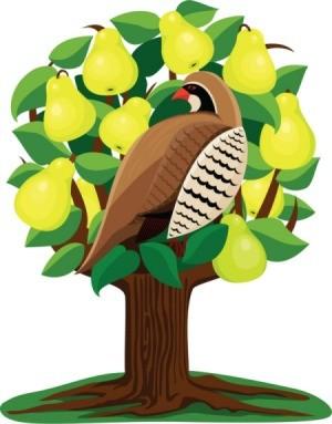 Partridge in a Tree