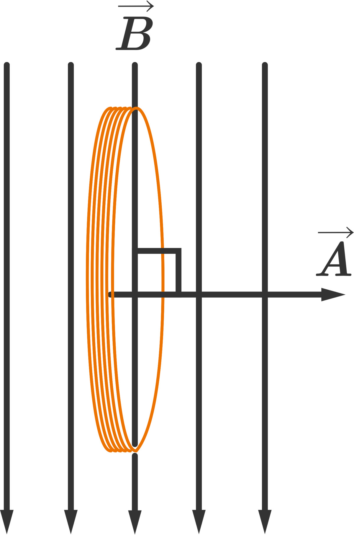 A coil of wire in a vertical magnetic field. The area vector \(\vec{A}\) for the plane of the wire is perpendicular to the field, so there is no magnetic flux.