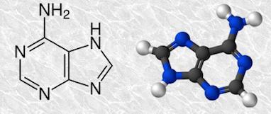 adenine[1]
