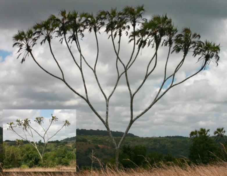 The Binary Tree