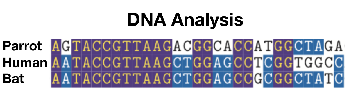 DNA sequence comparison of hemoglobin